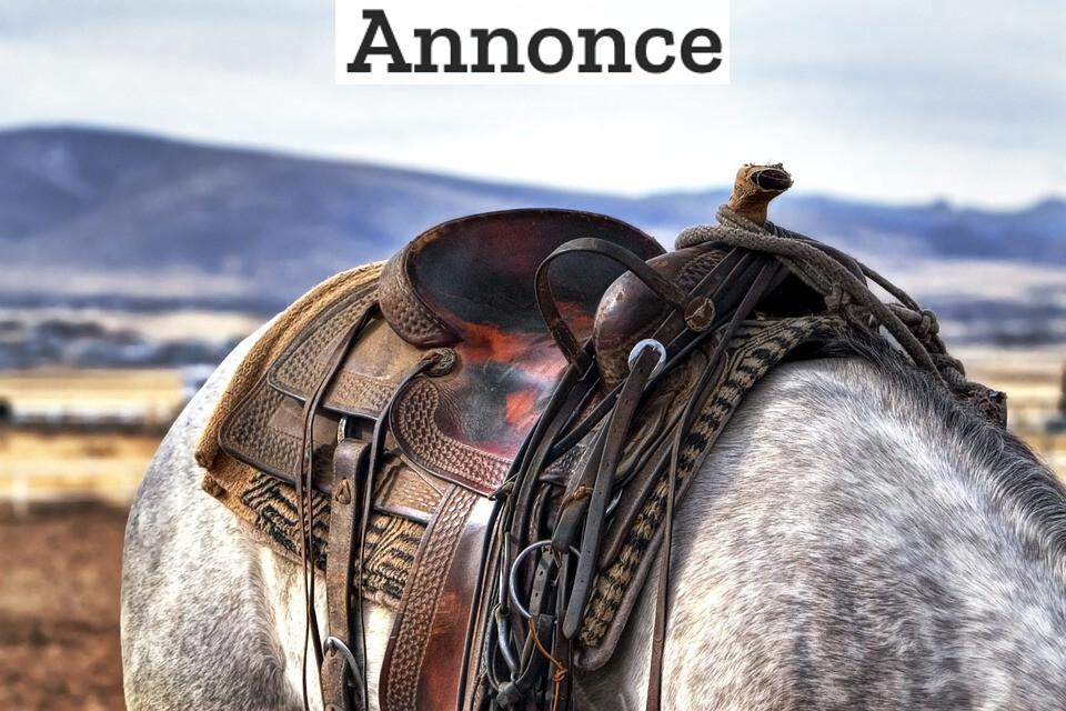 Har du hest? Så husk at vedligeholde dit udstyr