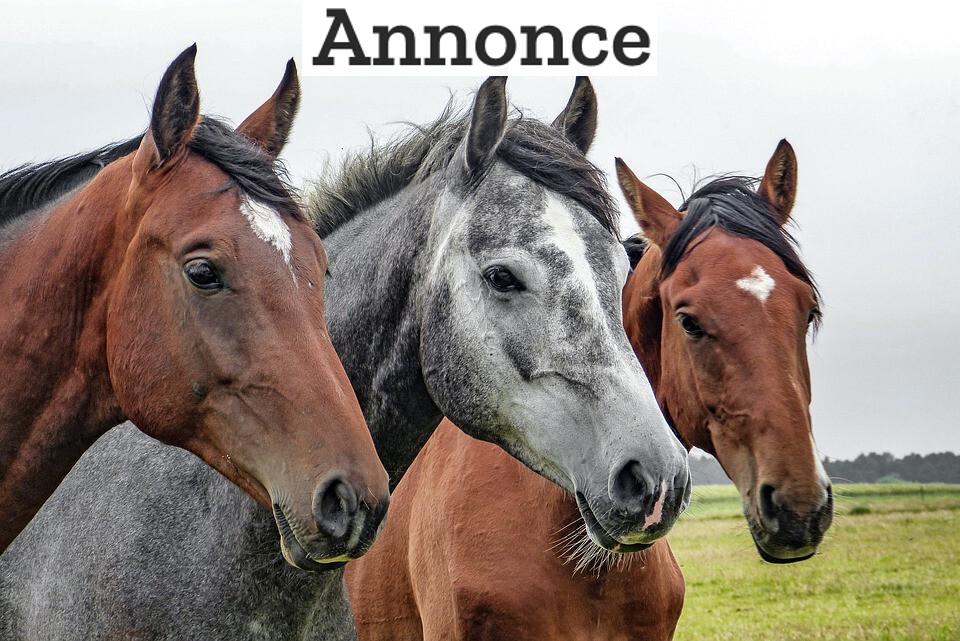 Sådan kommer du hurtigt afsted på din hest igen