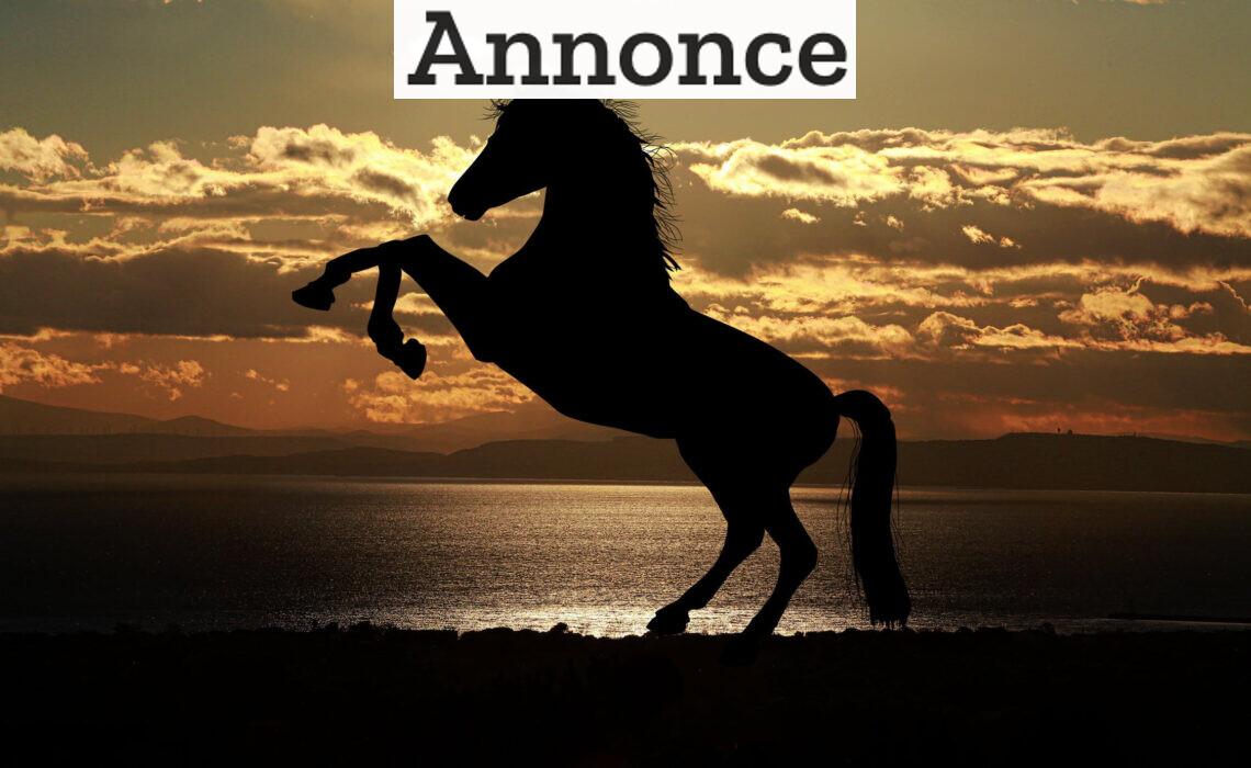 Før du køber en hest