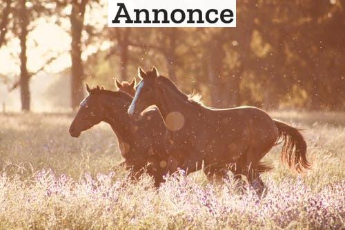 Overvejer du at få en hest?