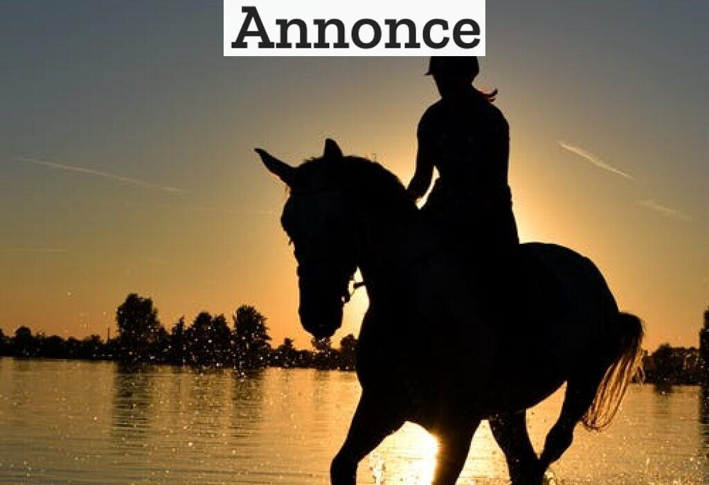 Aktiviteter sammen med din hest