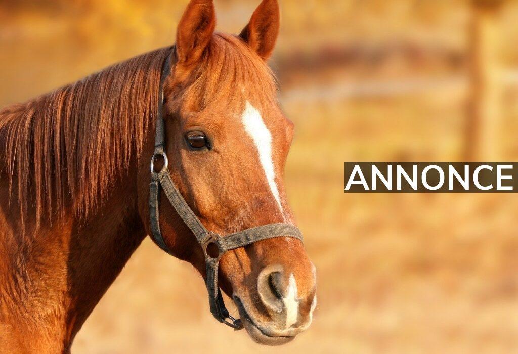 Køb foder og udstyr til din hest online