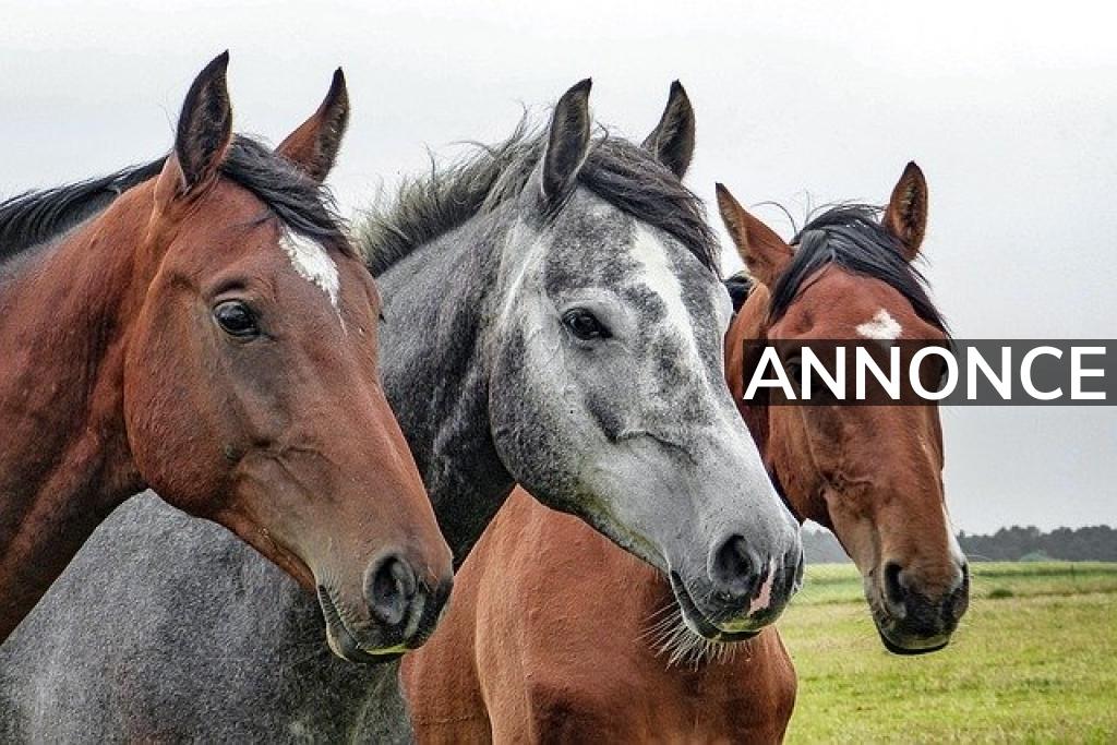 Derfor skal du tage et kursus i hestetransport