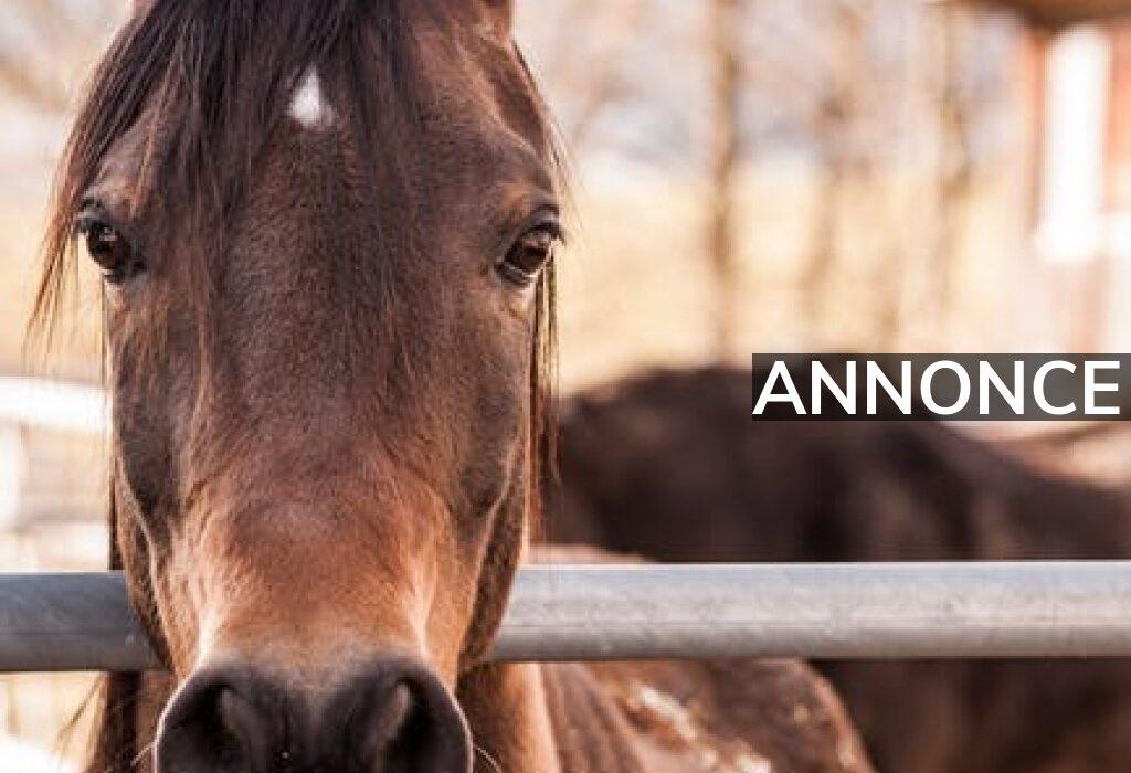 Find den rigtige container og tilhørende udstyr til din hest