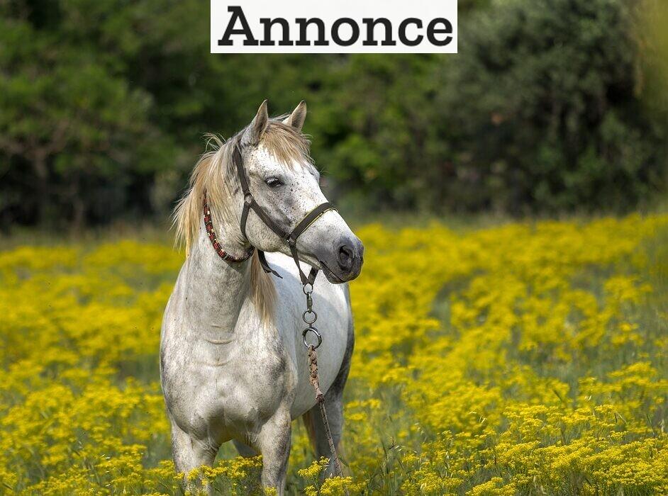 Mange danskere er vilde med heste