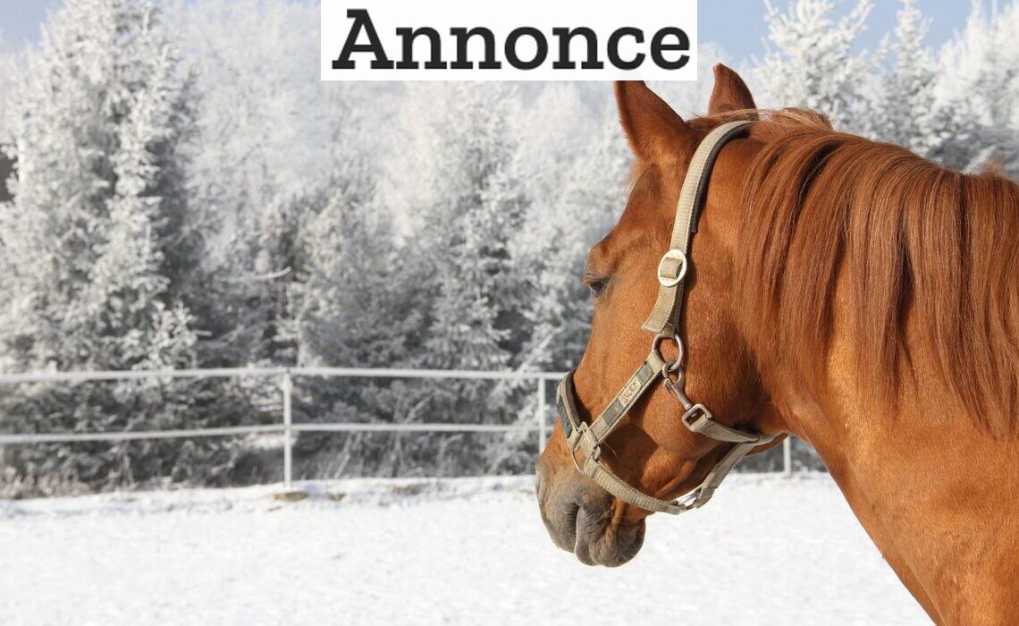 Pas godt på din hest: Her er de essentielle vitaminer og mineraler, din hest har brug for