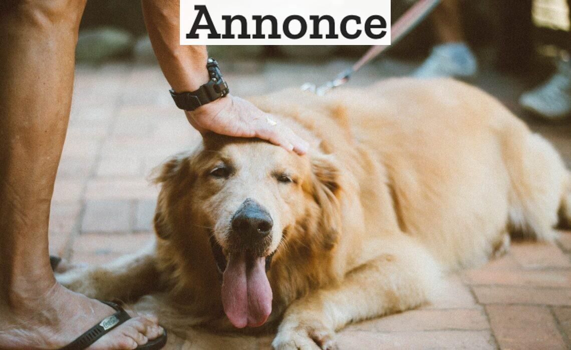 Sådan sørger du for at din hund lever længst